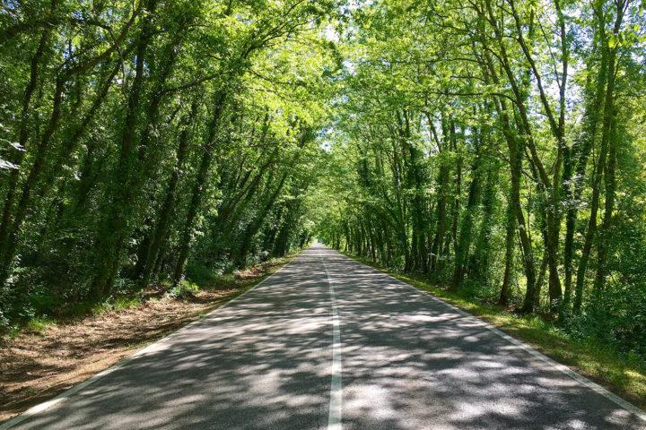 Massa Marittimába egy nagyon szép, kis forgalmú út vitt. Maremmában minden út kisforgalmú.