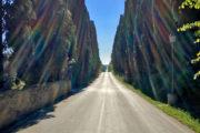 A híres bolgheri ciprussoros út, 5km tömény gyönyör.