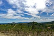 San Gimignano dombji bővelkednek szőlőben
